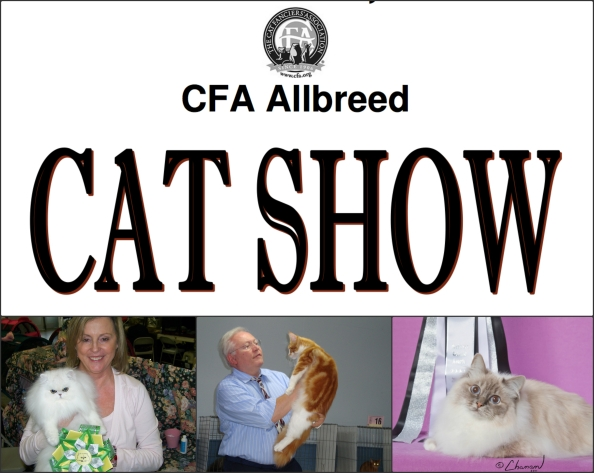 big cat show collage
