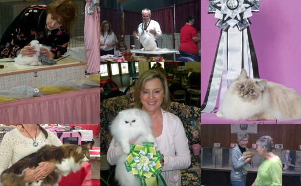 cat show collage